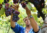 A todo ritmo comenzó la Fiesta del Vino de la Costa en Berisso 4