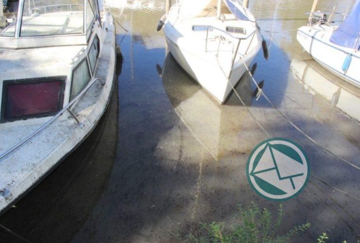 Mortandad de peces en el lecho del Río Santiago 2