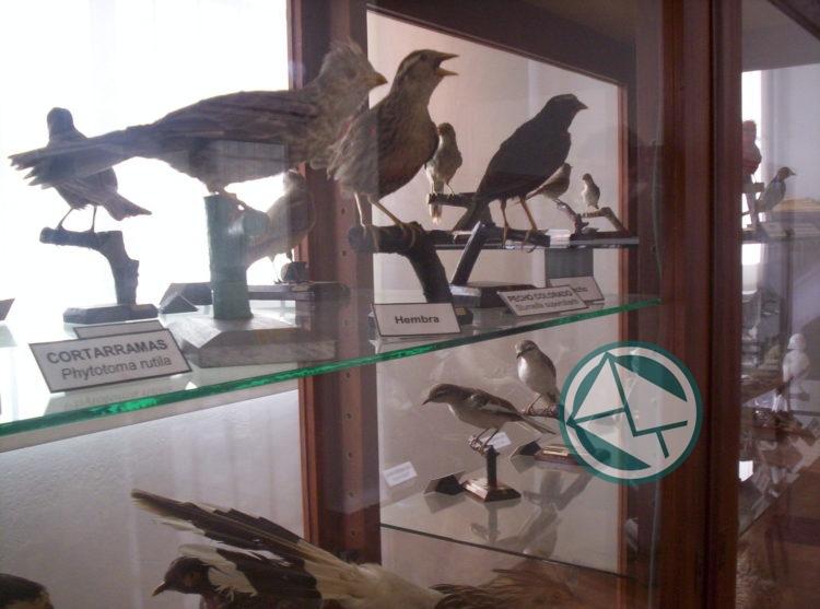 Museo Ornitológico 2