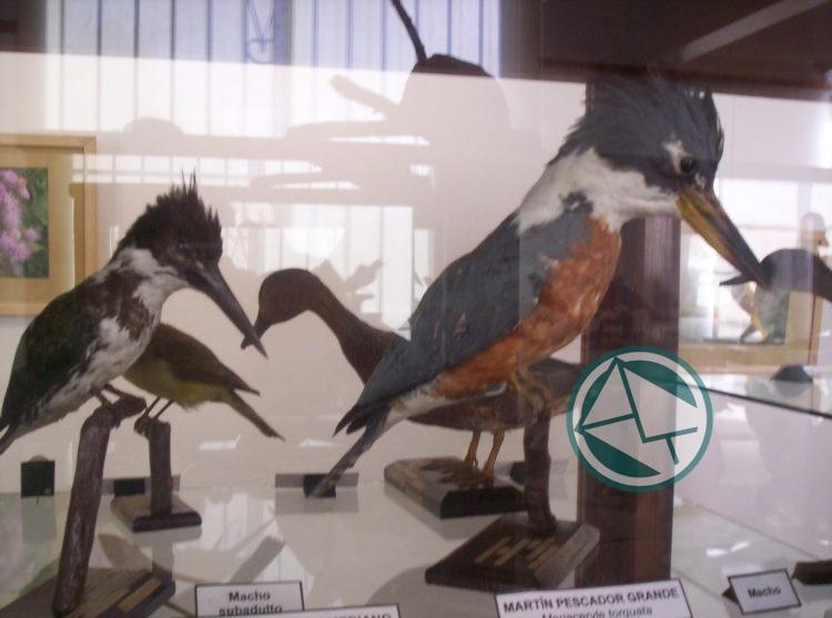 Museo Ornitológico 3