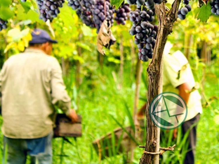 Fiesta del Vino de la Costa1