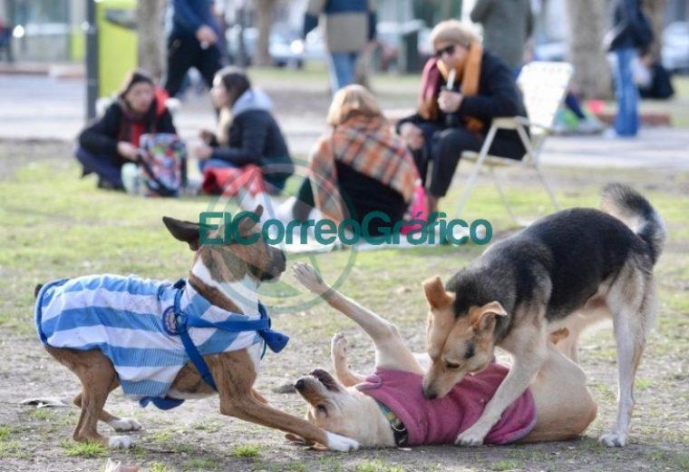 Más de 40 mil personas participaron de FLAP! en Plaza Malvinas 02