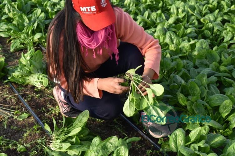 La rama rural del MTE reparte bolsones de verduras a domicilio 0