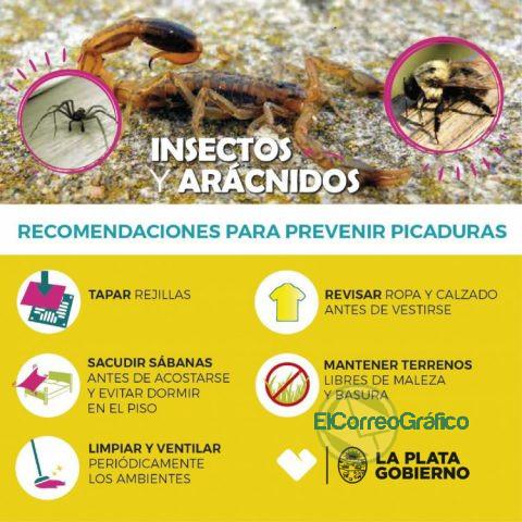 Recomendaciones ante la posible aparición de alacranes y escorpiones 1