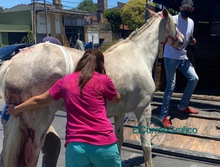 Se rescato a una yegua con graves heridas y se logro ponerla a salvo