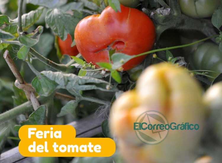 A raiz de las condiciones climaticas se pospuso la Feria del Tomate Platense