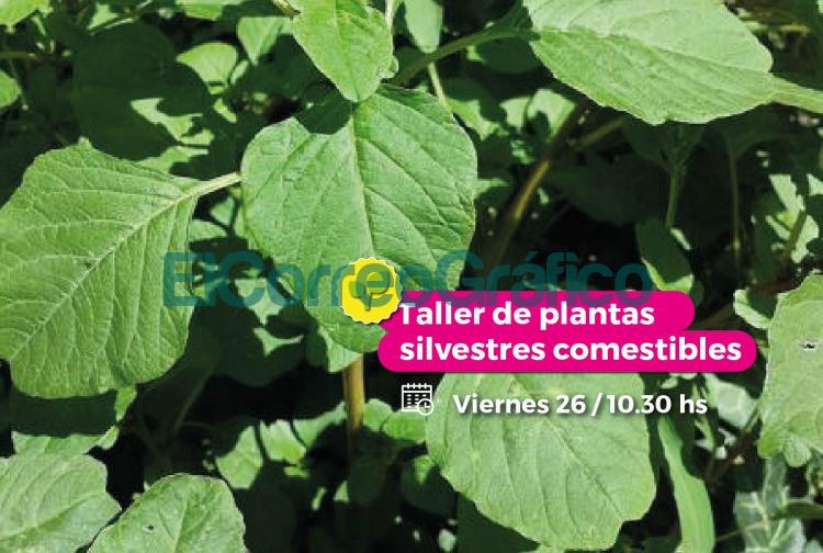 Impulsan un taller presencial de plantas silvestres comestibles en el Parque Ecologico