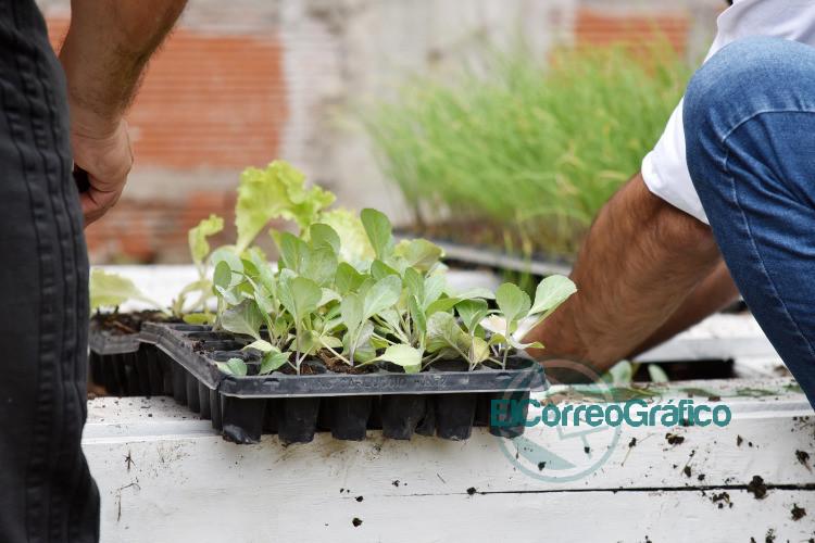 Iniciaron un nuevo ciclo de la propuesta que promueve el cultivo autogestivo de alimentos 1