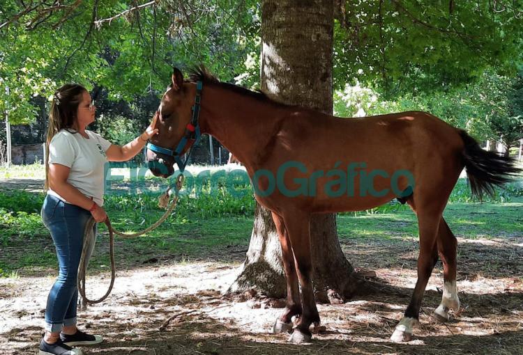 Se rescato a dos caballos con signos de maltrato