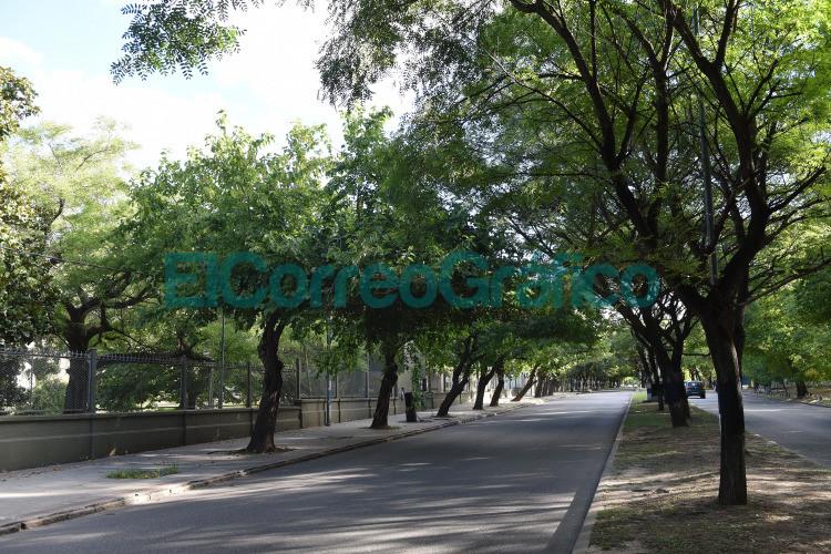 El Municipio y la UNLP avanzaran con la mejora del arbolado publico de la zona universitaria