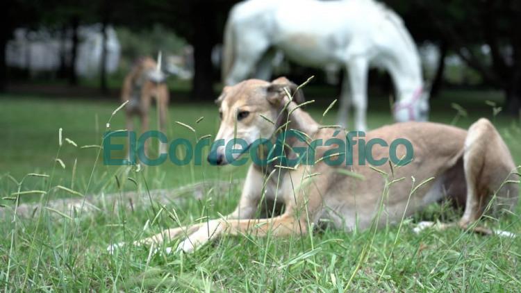 Mas de 400 animales ya fueron asistidos en el predio municipal de recuperacion veterinaria 2