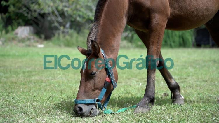 Mas de 400 animales ya fueron asistidos en el predio municipal de recuperacion veterinaria 3