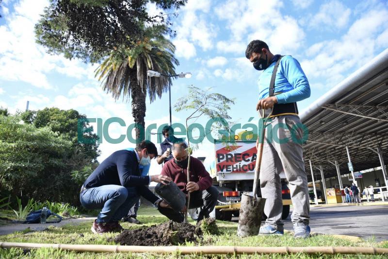 El Municipio coloco eco ceniceros y planto nuevos arboles en la Terminal de Omnibus 3
