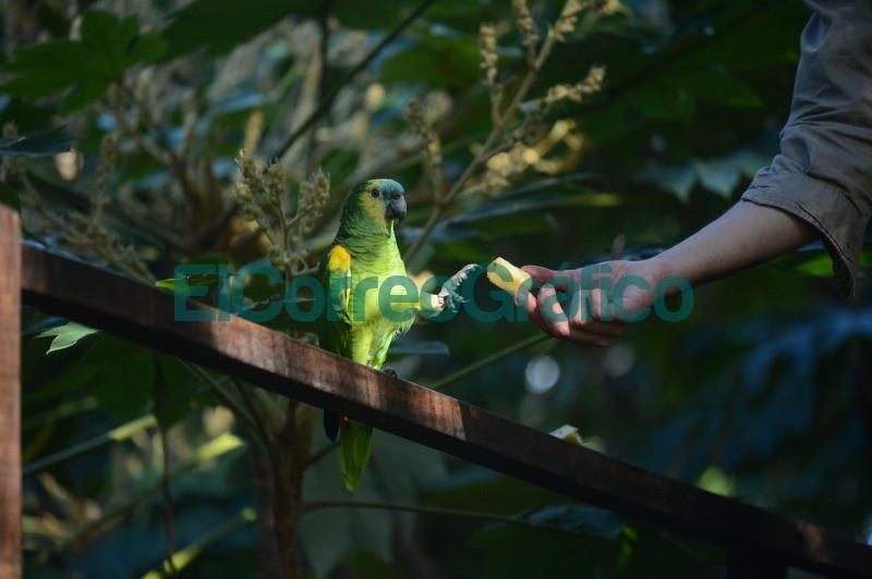 impulsan actividades para promover habitos naturales en especies en cautiverio 1