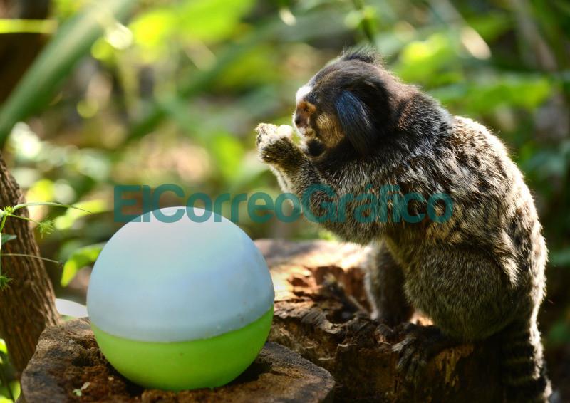 impulsan actividades para promover habitos naturales en especies en cautiverio 2