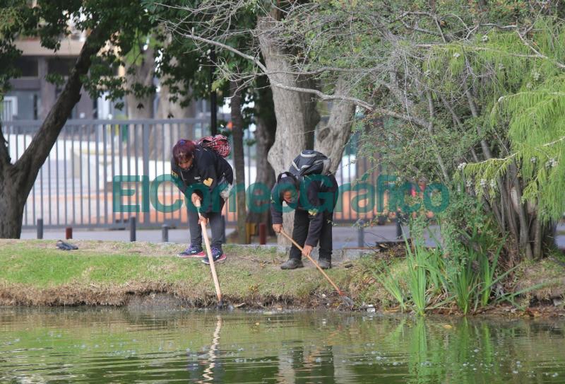 Se llevaron adelante nuevas tareas de limpieza y saneamiento en el Lago del Bosque