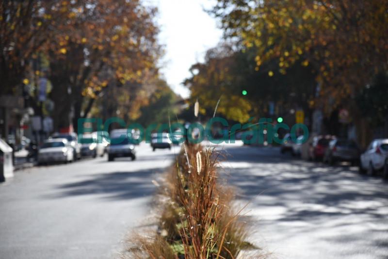 Colocaron mas de 700 plantas en el divisor central de la Avenida 13 desde 44 a 50 3