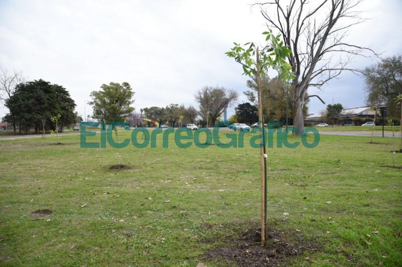 Forestaron el pano verde lindante a avenida Antartida en La Plata 1