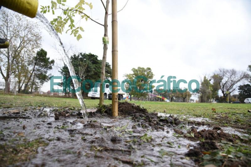 Forestaron el pano verde lindante a avenida Antartida en La Plata 5