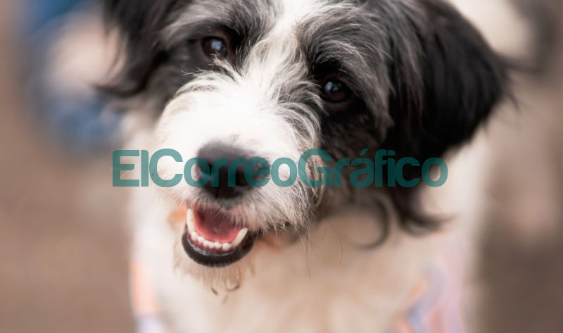 Llega una jornada de vacunacion veterinaria gratuita a Plaza Alsina