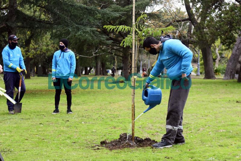 Con la plantacion de 150 arboles reforestan el cordon verde en el Paseo del Bosque 4